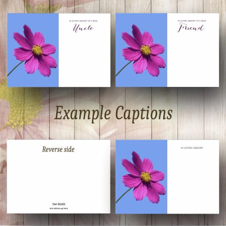 Magenta Cosmos Flower Text Example