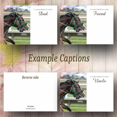 Race Horses Text Example