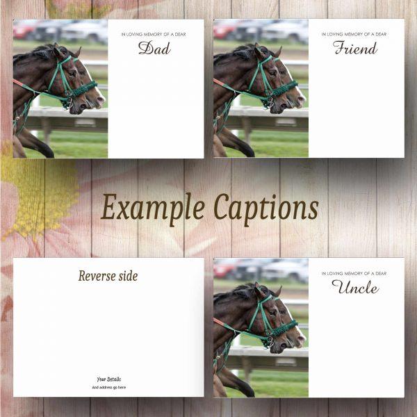 Race Horses Text Example
