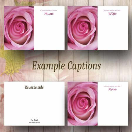 Pink Rose Text Example