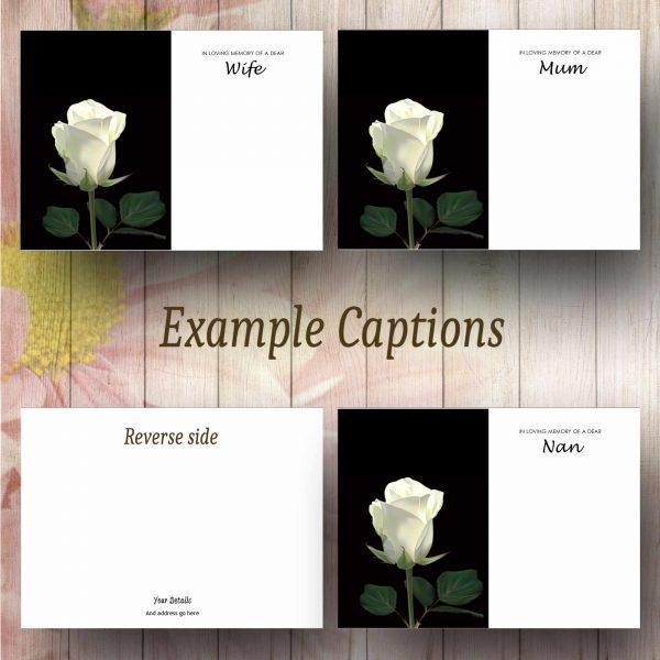 Single White Rose Text Example